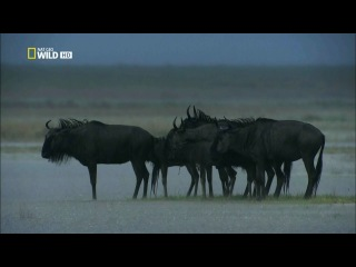 [National Geographic] �������: �������� ����� / Zambezi: Source Of Life (2010) HDTVRip 720p